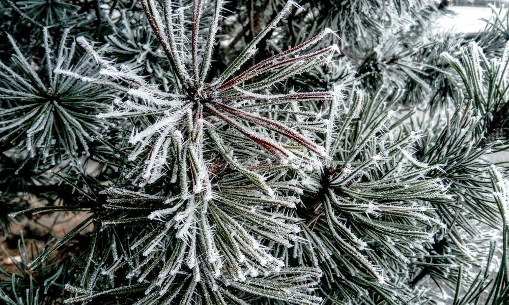 Frostiger Weihnachtsbaum